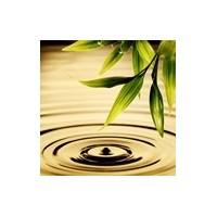Olio essenziale di alta qualità per emozionare il tuo olfatto
